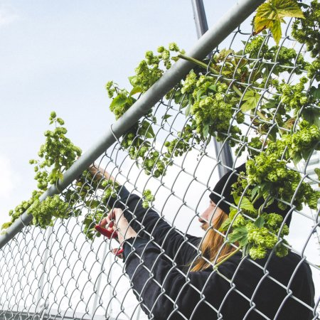 33 Acres Partners With Sole Food Street Farms on Charity Beer