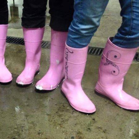 dogwood_pinkboots