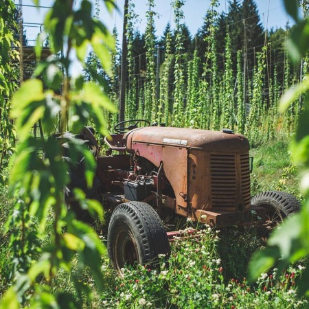 British Columbia Loosens Rules for Farm-Based Breweries