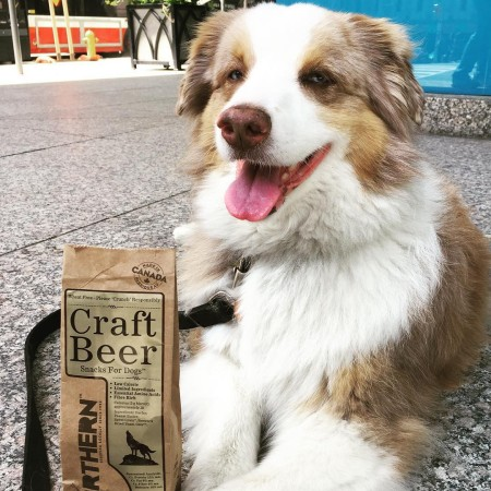 Northern Biscuit Bakery Launches Craft Beer Snacks For Dogs