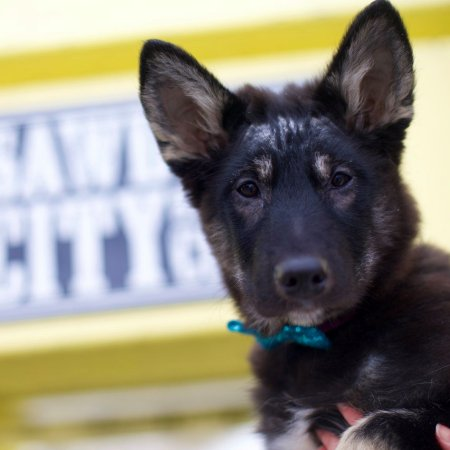 Sawdust City Brewing Brings Back Dogtober Campaign for Paws of the North Rescue